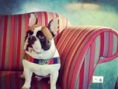 """Konkurs na Instagramie """"Z pupilem w hotelu #accor4pets""""! Zrób zdjęcie zwierzakowi i spędź weekend w eleganckim hotelu."""